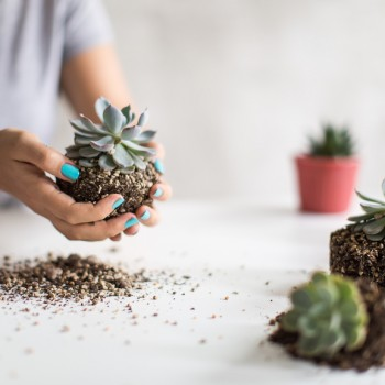 Image of woman holding a mini cactus plant