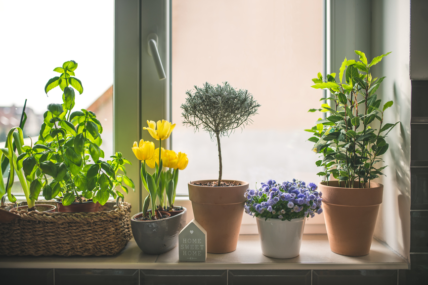 Image with flower pots placednext to the window