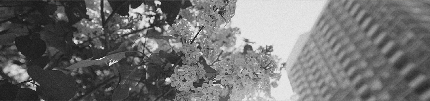 photograph of flowers
